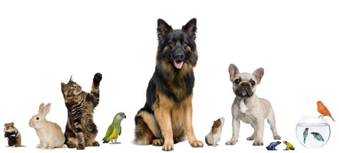 Info veterinaire appelez un v t rinaire en france for Veterinaire debussy salon de provence